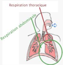 Respiration abdominale vs respiration thoracique